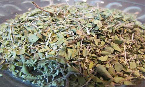 آویشن در طب سنتی؛ از درمان سرفه تا سردمزاجی