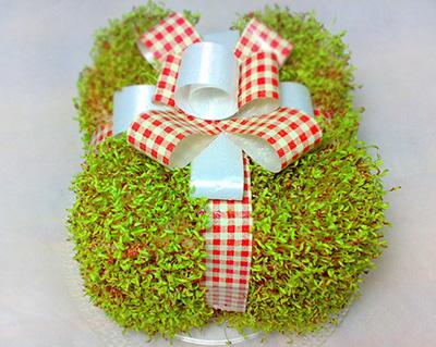 آموزش کاشت سبزه عید به شکل جعبه هدیه