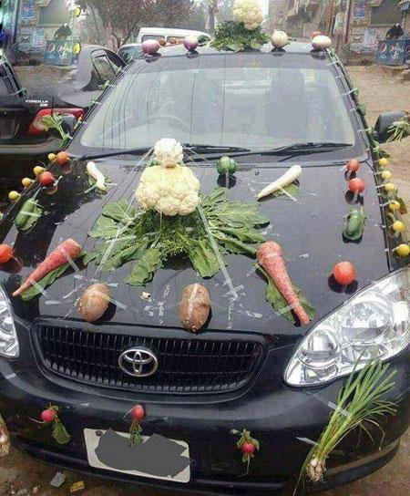 ماشین عروس گیاه خواران