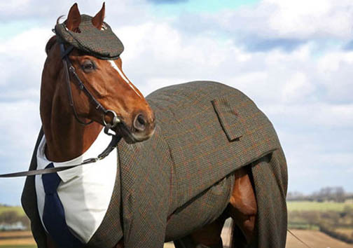 اسب خوش تیپ
