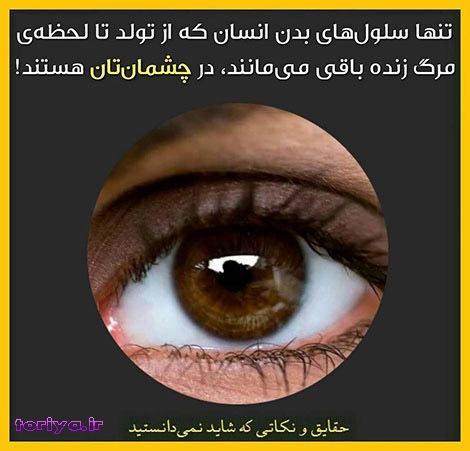 سلول چشم