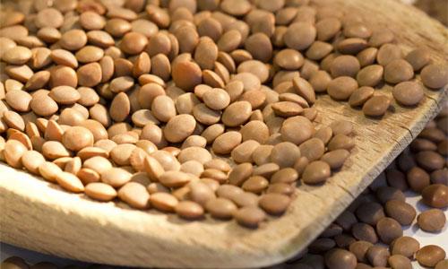 عدس: منبع پروتئین و آنتی اکسیدان ها