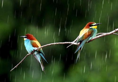 اس ام اس باران سری اول